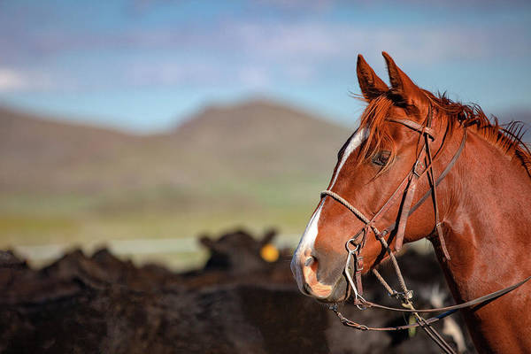 Photograph - Horse Profile by Todd Klassy