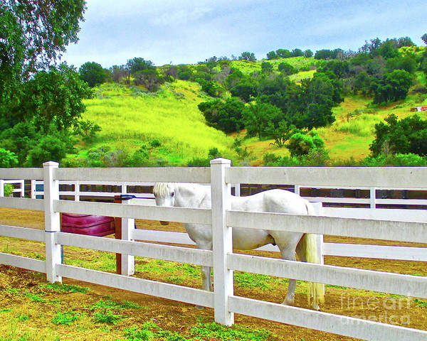 Wall Art - Photograph - Horse Ranch And Wild Flowers by Jerome Stumphauzer