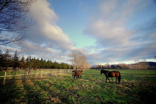 Ranch Photograph - Horse Ranch by Sstop