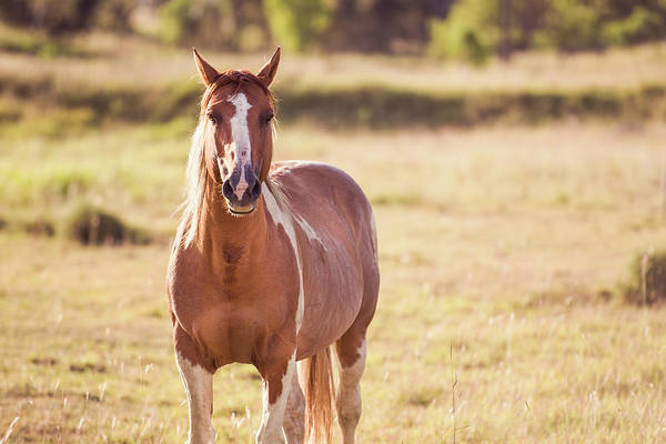 Photograph - Horse by Rob D Imagery