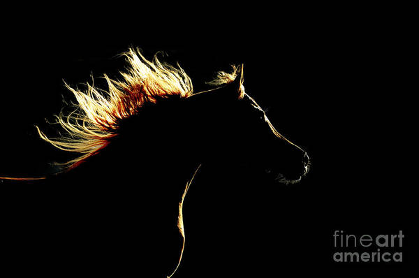 Wall Art - Photograph - Horse Silhouette On The Dark Background by Makarova Viktoria