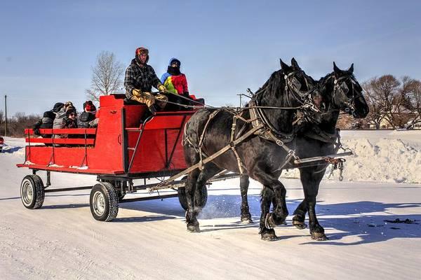 Photograph - Horse Sleigh Rides by David Matthews