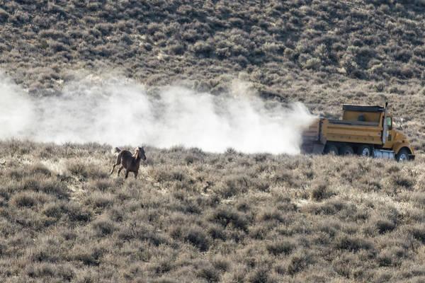 Photograph - Horse Vs Truck On Public Lands by Belinda Greb