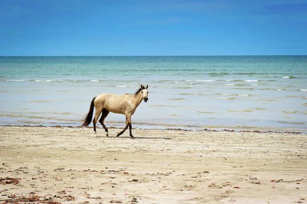 Wall Art - Photograph - Horse Walking On Beach by Vitor Groba