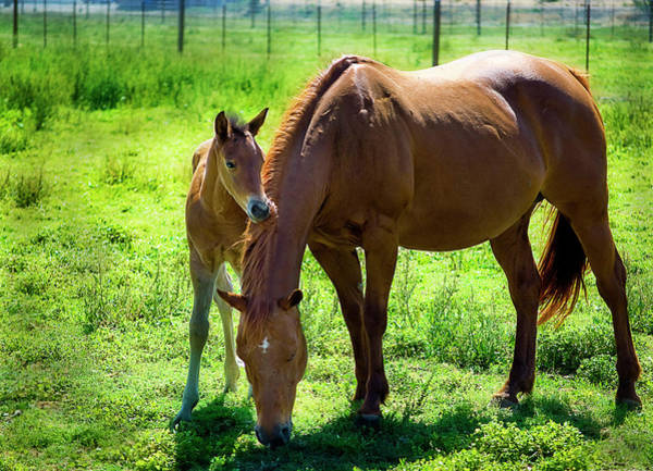 Wall Art - Photograph - Horse With Colt by Sheree Lynn Photography