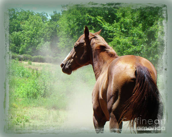 Horse With Dust Art Print