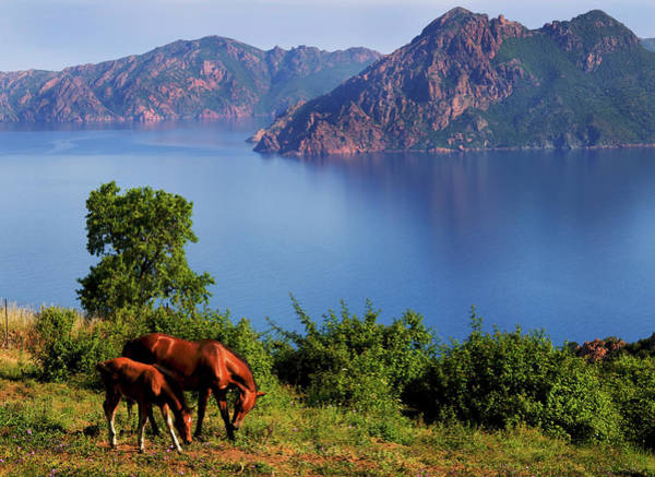 Grazing Photograph - Horse With Offspring Grazing, Island Of by Elfi Kluck