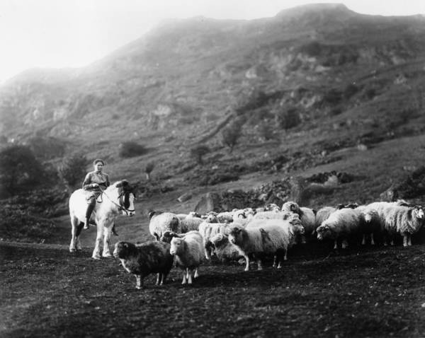 Herd Of Horses Wall Art - Photograph - Horseback Shepherdess by Hulton Collection