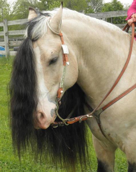 Photograph - Horsefest Beauty by Barbara Keith