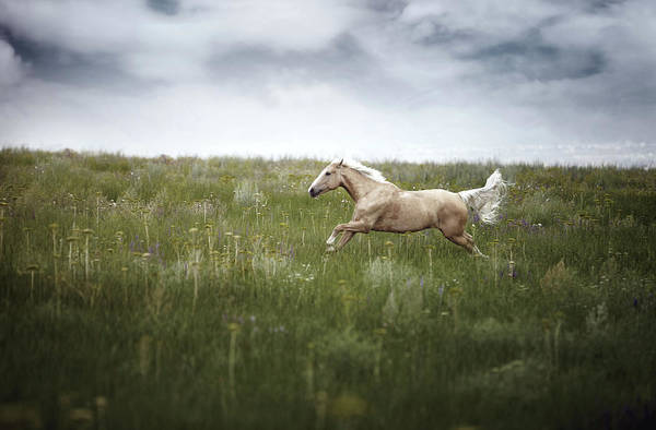 Wall Art - Photograph - Horsepower by Arman Zhenikeyev - Professional Photographer From Kazakhstan