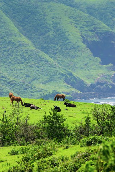 Sea Cow Photograph - Horses And Cows On The Mountain By The by Ippei Naoi