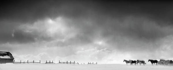 Charlevoix Photograph - Horses And Wooden Fence In Snowy by Chris Clor