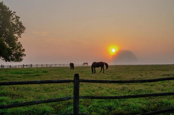 Photograph - Horses At Sunrise - Widener Farm by Bill Cannon