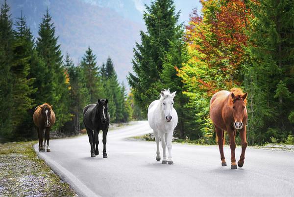 Wall Art - Photograph - Horses by Bess Hamiti