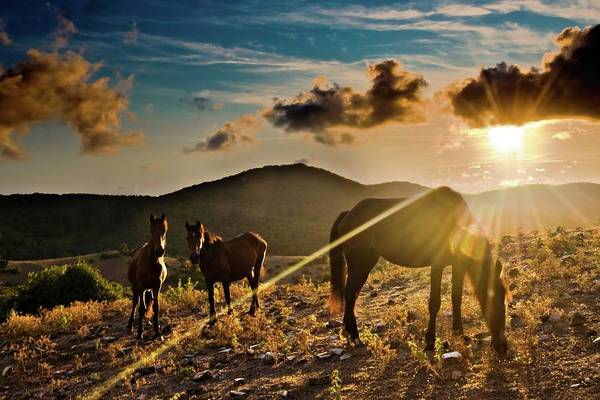 Grazing Photograph - Horses Grazing At Sunset by Finasteride