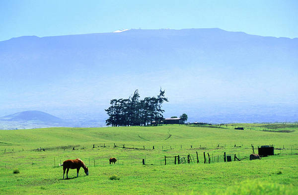 Big Island Photograph - Horses Grazing Beneath The Towering by Ann Cecil