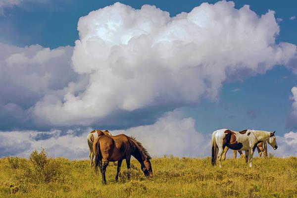 Westcliffe Photograph - Horses Grazing Up Near The Clouds by John Bartelt