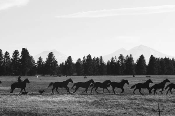 Wall Art - Photograph - Horses In Black And White by Angi Parks