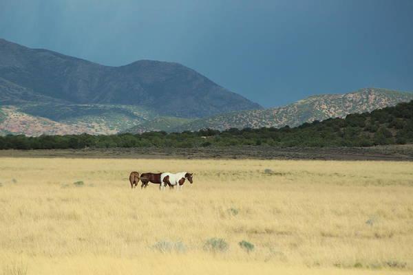 Photograph - Horses In Field In Utah by Colleen Cornelius