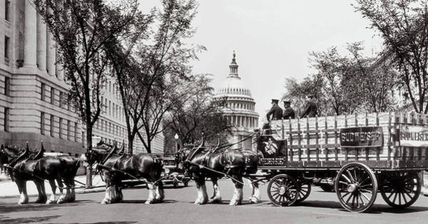 Photograph - Horses In Prohibition  - Washington D.c. - Budweiser Clydesdale  by Doc Braham