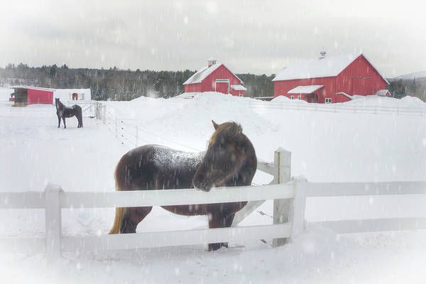 Photograph - Horses In Snow - Vermont Winter Art by Joann Vitali