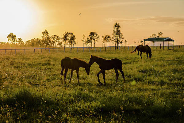 Photograph - Horses In The Paddock by Rob D Imagery