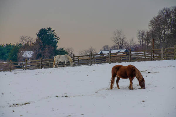 Photograph - Horses In The Snow - Chester County Pennsylvania by Bill Cannon
