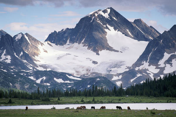 Art In Canada Photograph - Horses In Tonquin Valley, Jasper by Art Wolfe