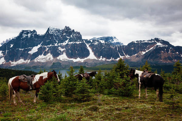 Herd Of Horses Wall Art - Photograph - Horses, Jasper National Park, Alberta by Mint Images/ Art Wolfe