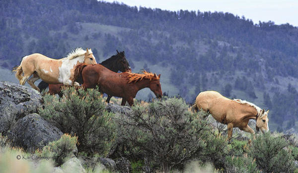 Photograph - Horses On A Downhill Run by Kae Cheatham