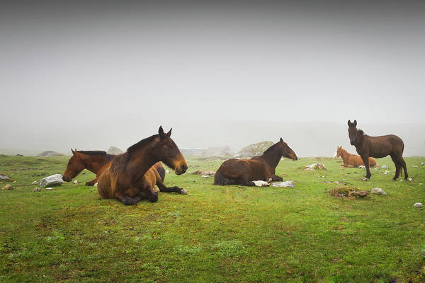 Cusco Photograph - Horses On Foggy Highland Meadow by Picturegarden