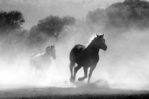 Photograph - Horses On The Run by Top Wallpapers