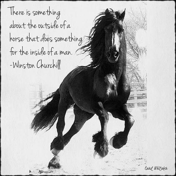 Photograph - Horse's Profound Spirit  by Carol Whitaker