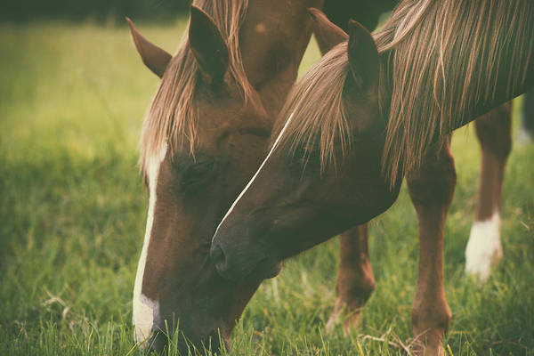 Photograph - Horses by Rob D Imagery