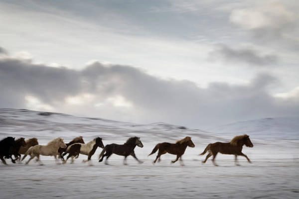 Scenery Photograph - Horses Running In A Field by Bjarki Reyr