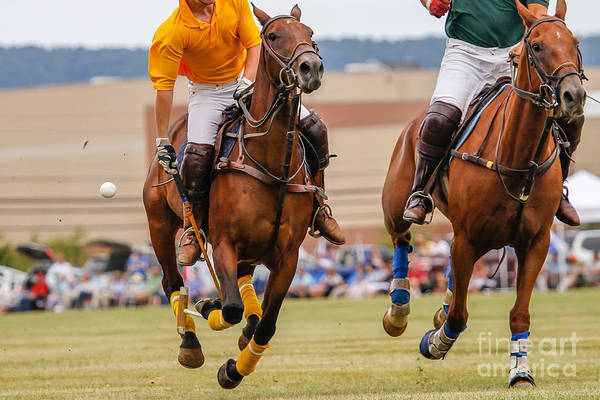 Wall Art - Photograph - Horses Running In A Polo Match by Hutch Photography