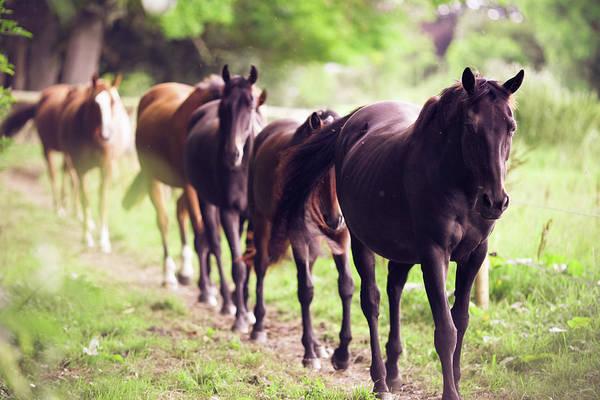 Wall Art - Photograph - Horses by Sasha Bell