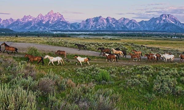 Herd Of Horses Wall Art - Photograph - Horses Walk by Jeff R Clow