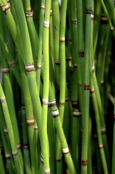 Wall Art - Photograph - Horsetails by Philary