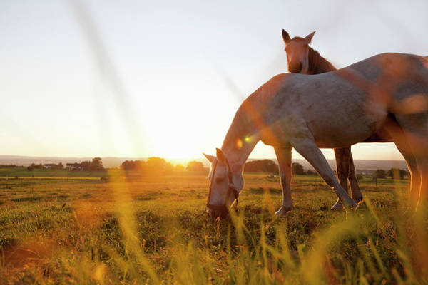Grazing Photograph - Hose Grazing In Rural Field by Stefanie Grewel
