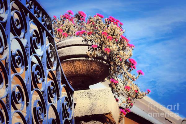 Wall Art - Photograph - Hot Pink Flower Bowl by Diann Fisher