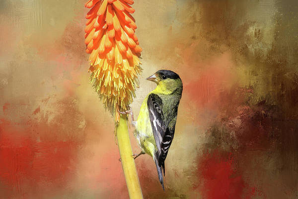 Wall Art - Photograph - Hot Summers And Hot Pokers by Donna Kennedy