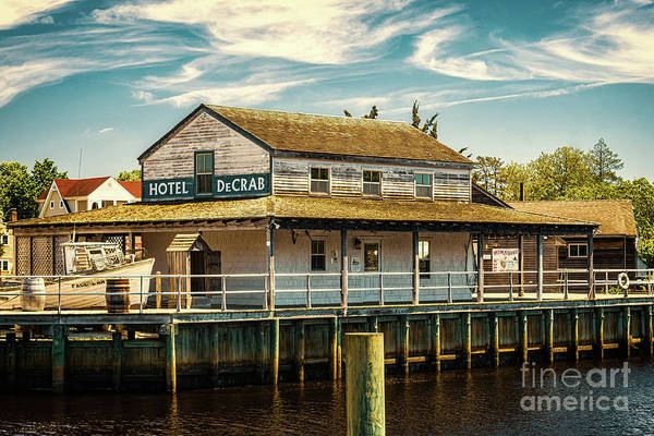 Photograph - Hotel De Crab by Nick Zelinsky