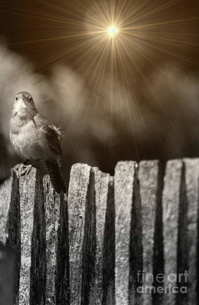 Photograph - House Wren by Randy J Heath