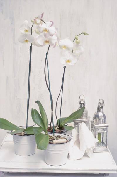 Enamel Wall Art - Photograph - Houseplant Orchid - Phalaenopsis, 3 by Linda Burgess