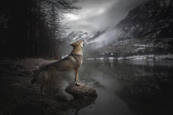 Czechoslovakian Photograph - Howling  by Alicja Zmyslowska