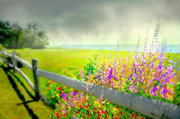 Wall Art - Photograph - Hug A Fence by Diana Angstadt
