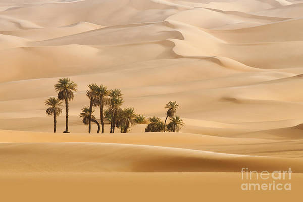 Wall Art - Photograph - Huge Dunes Of The Desert. Fine Place by Denis Burdin