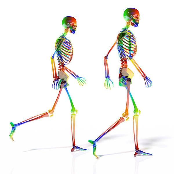Wall Art - Digital Art - Human Skeleton Pair by Betsy Knapp