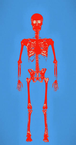 Painting - Human Skeleton Pop Art by Dan Sproul